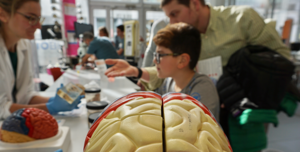 Female scientist explains anatomy of the brain to father and son